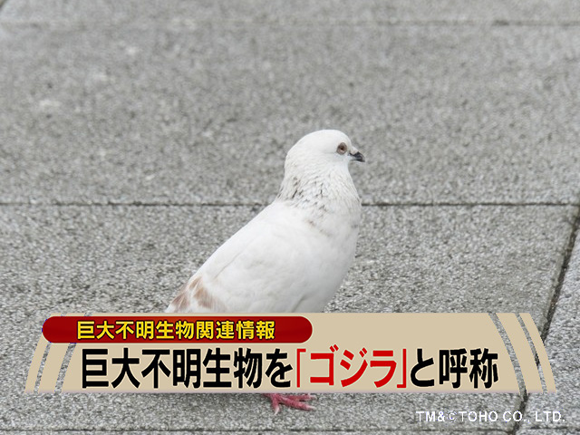 『シン・ゴジラ 』デジカメ